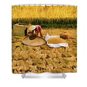 Harvesting Rice Fields Vietnamese Woman  Shower Curtain