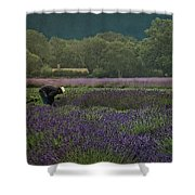 Harvesting The Lavender, Long Island Shower Curtain