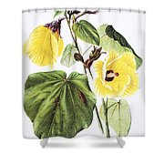 Hau Flower Art Shower Curtain
