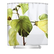 Hau Plant Art Shower Curtain