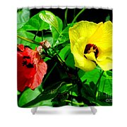 Hau Tree Blossoms Shower Curtain