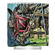 Haulin' Shower Curtain