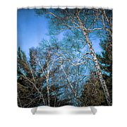 Haunted Trees Shower Curtain