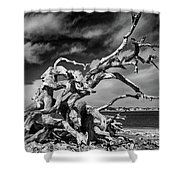 Haunting Beauty Shower Curtain
