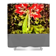 Havana Amaryllis Shower Curtain
