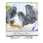 Havanese Dog Shower Curtain
