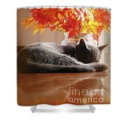 Have A Restful Thanksgiving Shower Curtain