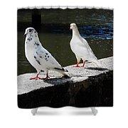 Hawaii Birds 9 Shower Curtain