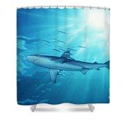 Hawaii Galapagos Shark Shower Curtain