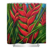 Hawaii Heliconia Flowers #445 Shower Curtain
