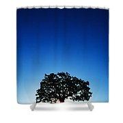 Hawaii Koa Tree Shower Curtain