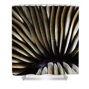 Hawaii Mushroom Coral Shower Curtain
