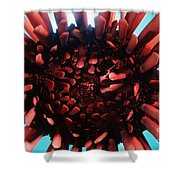 Hawaii Pencil Urchin Shower Curtain