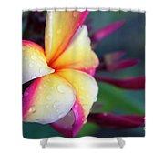 Hawaii Plumeria Flower Jewels Shower Curtain