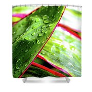 Hawaii Ti Leaves Morning Shower 559 Shower Curtain
