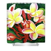 Hawaii Tropical Plumeria Flower #205 Shower Curtain