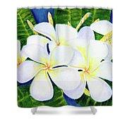 Hawaii Tropical Plumeria Flower  #208 Shower Curtain