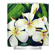Hawaii Tropical Plumeria Flowers #160 Shower Curtain