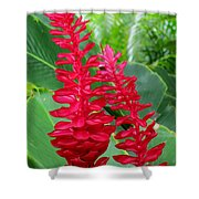 Hawaiian Beauty 2 Shower Curtain