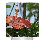 Hawaiian Beauty Shower Curtain