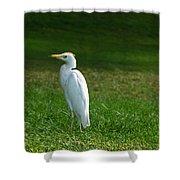 Hawaiian Cattle Egret Shower Curtain