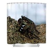 Hawaiian Crab Legs Shower Curtain