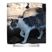 Hawaiian Feral Cat 2 Shower Curtain