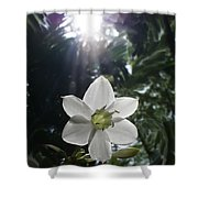 Hawaiian Flower Shower Curtain