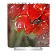 Hawaiian Frog Shower Curtain