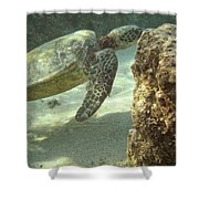 Hawaiian Green Sea Turtle Shower Curtain