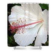 Hawaiian Hibiscus 2 Photograph Shower Curtain