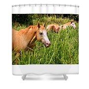 Hawaiian Horses In Sugar Cane Shower Curtain
