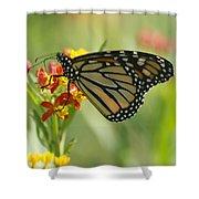 Hawaiian Monarch 1 Shower Curtain