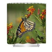 Hawaiian Monarch 2 Shower Curtain