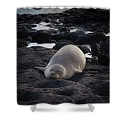 Hawaiian Monk Seal Shower Curtain