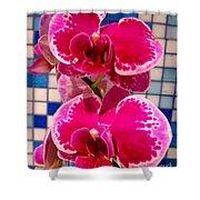 Hawaiian Orchid 1 Shower Curtain