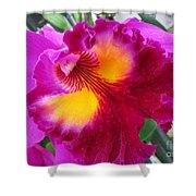 Hawaiian Orchid 2 Shower Curtain