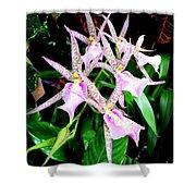 Hawaiian Orchid 31 Shower Curtain