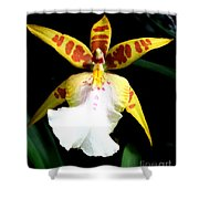 Hawaiian Orchid 32 Shower Curtain