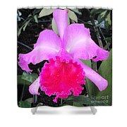 Hawaiian Orchid 33 Shower Curtain