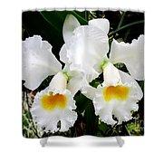 Hawaiian Orchid 35 Shower Curtain