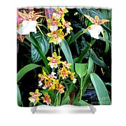 Hawaiian Orchid 36 Shower Curtain