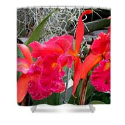 Hawaiian Orchid 37 Shower Curtain