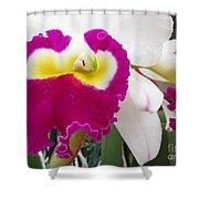 Hawaiian Orchid 4 Shower Curtain