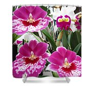 Hawaiian Orchid 5 Shower Curtain