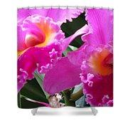 Hawaiian Orchid 6 Shower Curtain