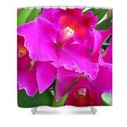 Hawaiian Orchid 8 Shower Curtain
