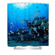 Hawaiian Reef Scene Shower Curtain by Dave Fleetham - Printscapes