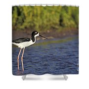 Hawaiian Stilt Bird In Water Shower Curtain