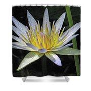 Hawaiian Water Lily 05 - Kauai, Hawaii Shower Curtain